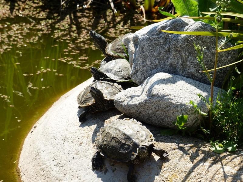 La Vallée des tortues - Sorède - 15.09.2012/13/04/2014 P1020212