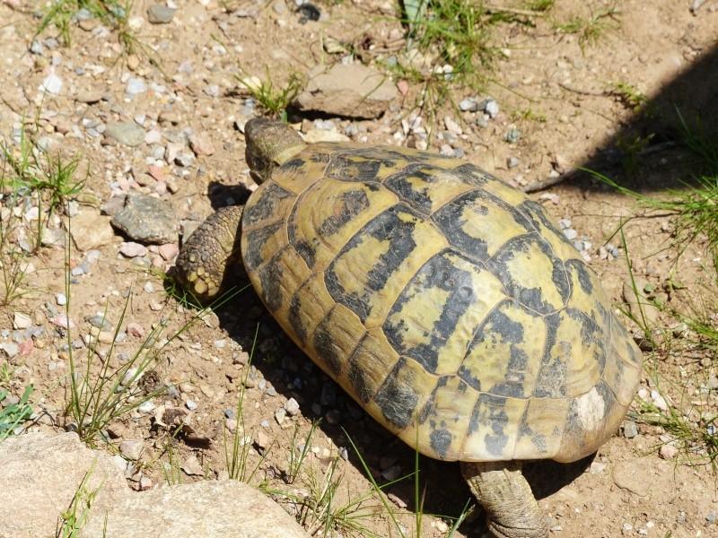 La Vallée des tortues - Sorède - 15.09.2012/13/04/2014 P1020214