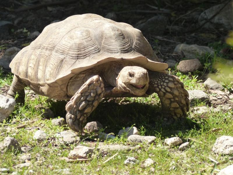 La Vallée des tortues - Sorède - 15.09.2012/13/04/2014 P1020217