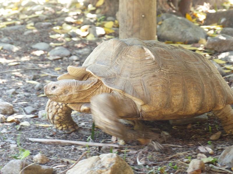 La Vallée des tortues - Sorède - 15.09.2012/13/04/2014 P1020310