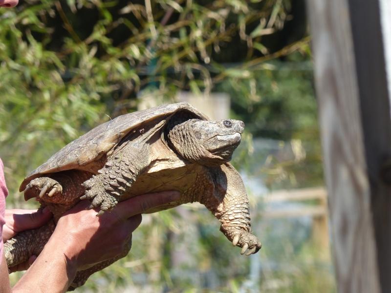 La Vallée des tortues - Sorède - 15.09.2012/13/04/2014 P1020315