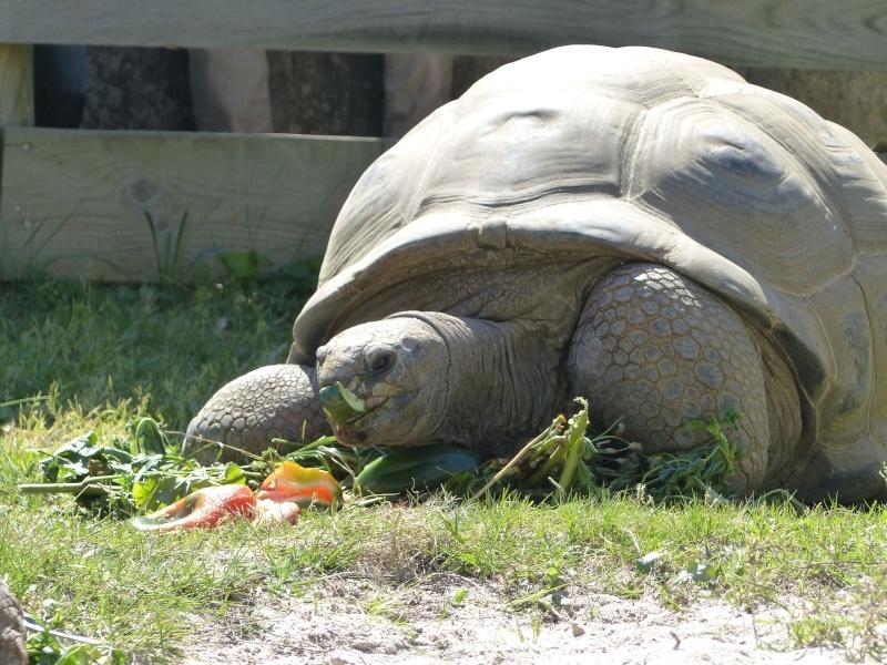 La Vallée des tortues - Sorède - 15.09.2012/13/04/2014 P1020316