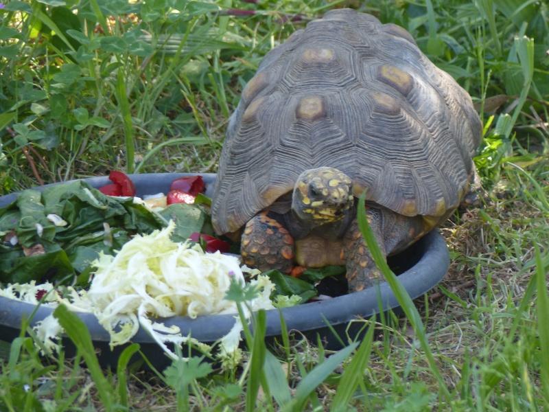 La Vallée des tortues - Sorède - 15.09.2012/13/04/2014 P1020410