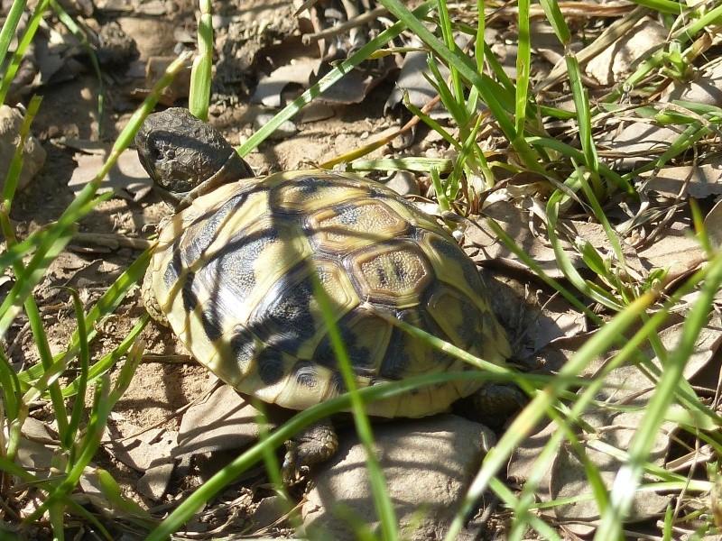 La Vallée des tortues - Sorède - 15.09.2012/13/04/2014 P1020412