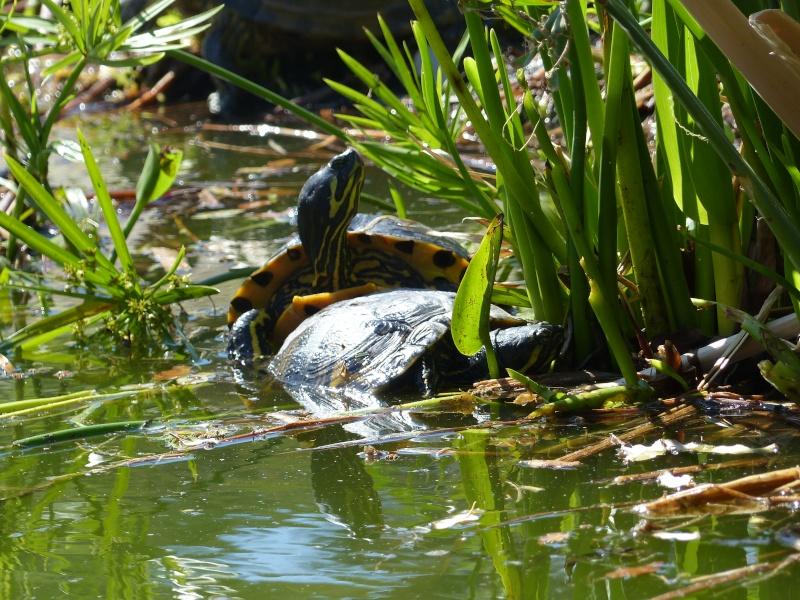 La Vallée des tortues - Sorède - 15.09.2012/13/04/2014 P1020418