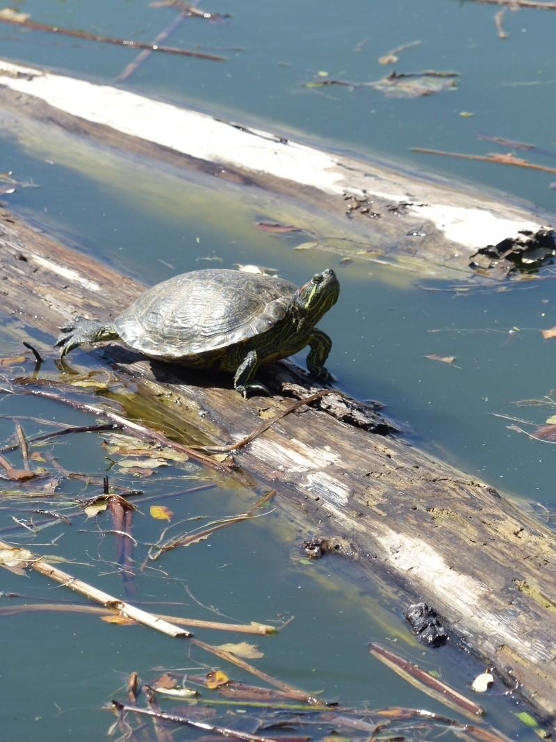 La Vallée des tortues - Sorède - 15.09.2012/13/04/2014 P1020423