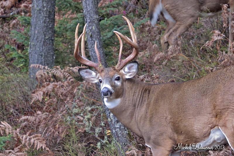 LE buck... Ww3_co12