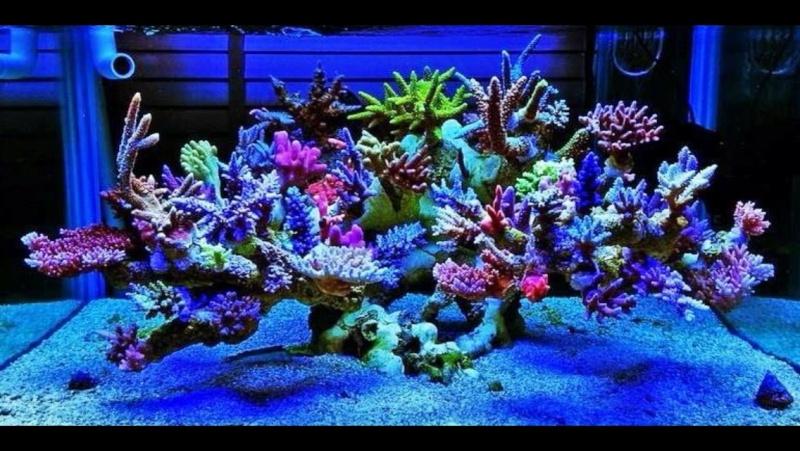 Décor En Ciment Prompt Aquarium Récifal Dessaivre Couvreur