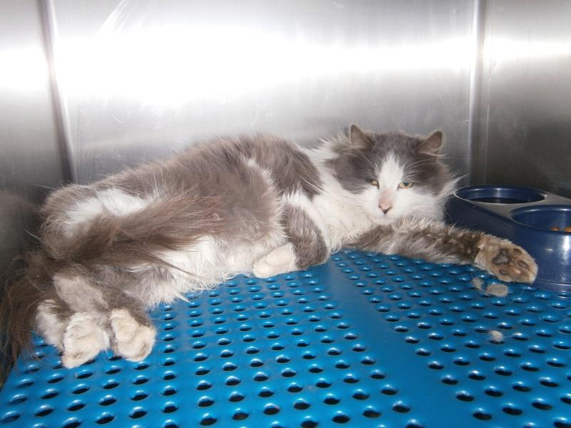 2 chats poils longs  plus 1en urgence recherchent FA Ptitpa11