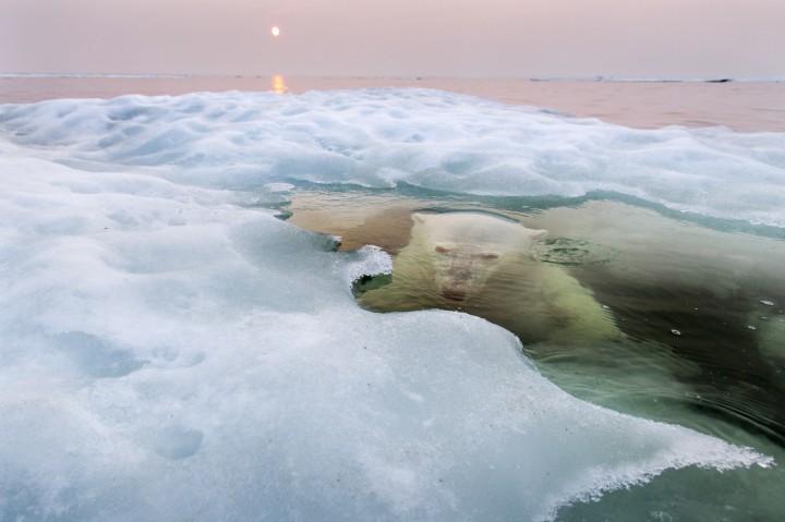 الصور الفائزة في مسابقة ناشيونال جيوغرافي 2013 Ngpc2010