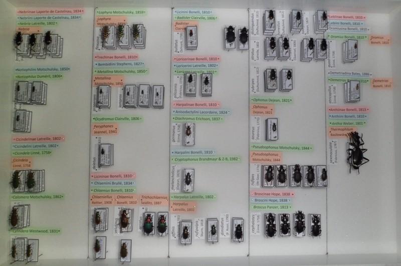 Présentation des collections Entomologiques - Page 6 Sam_7313