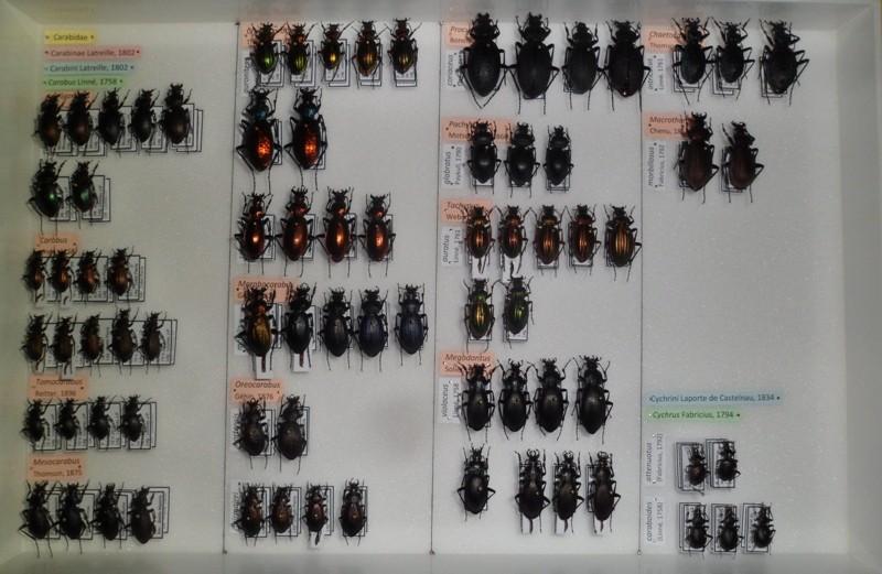 Présentation des collections Entomologiques - Page 6 Sam_7315