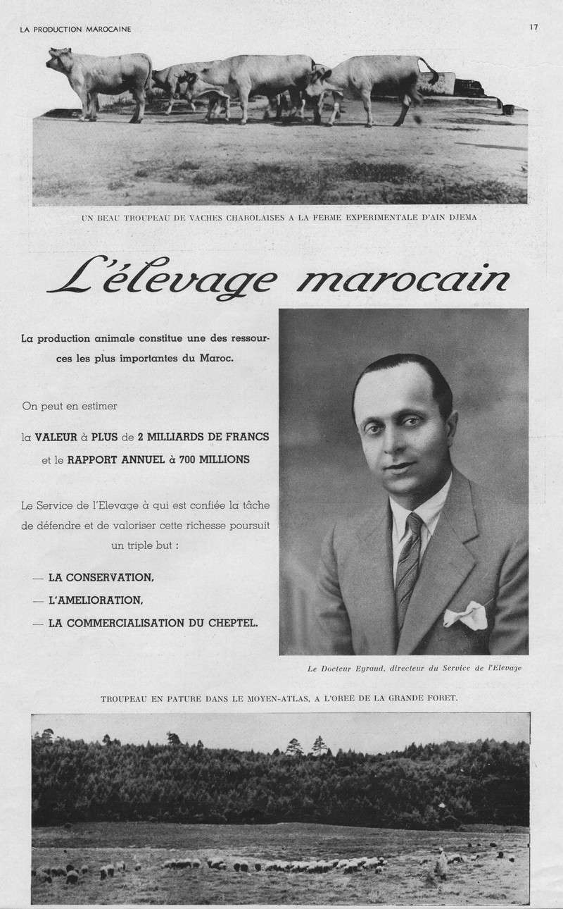 LA PRODUCTION MAROCAINE 07-sca10