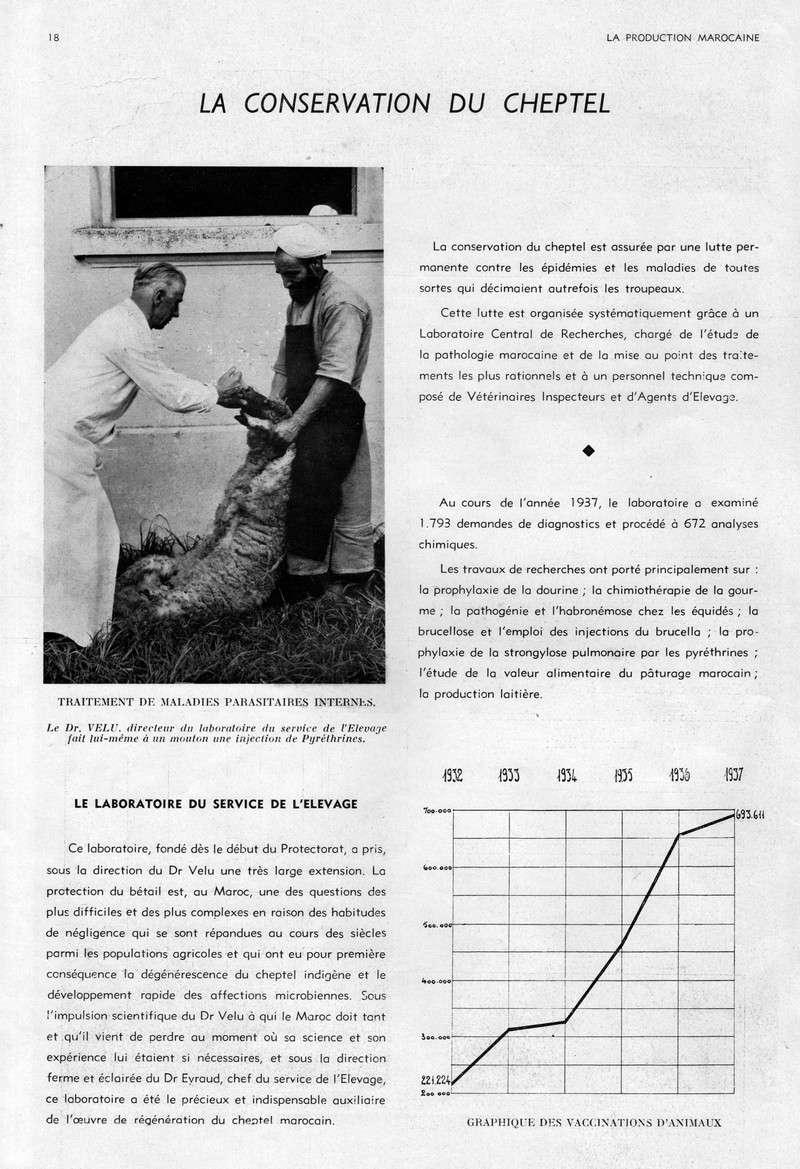 LA PRODUCTION MAROCAINE 08-sca10