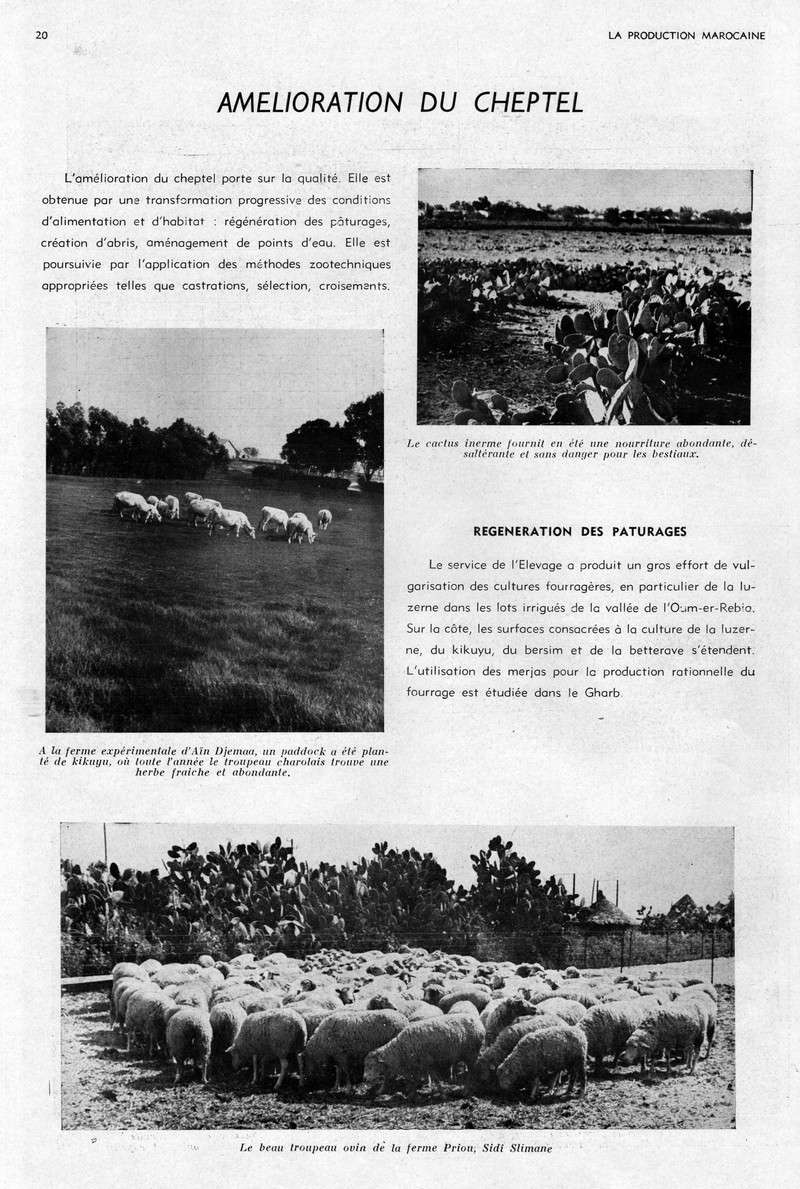 LA PRODUCTION MAROCAINE 10-sca10