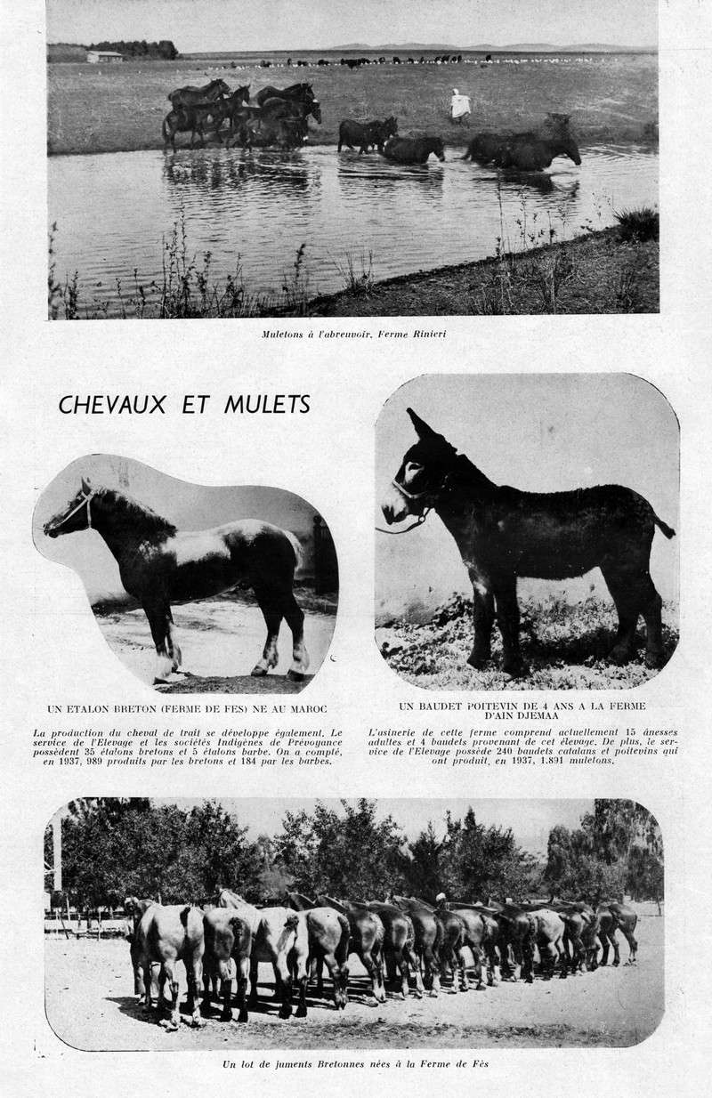 LA PRODUCTION MAROCAINE - Page 2 16-sca10