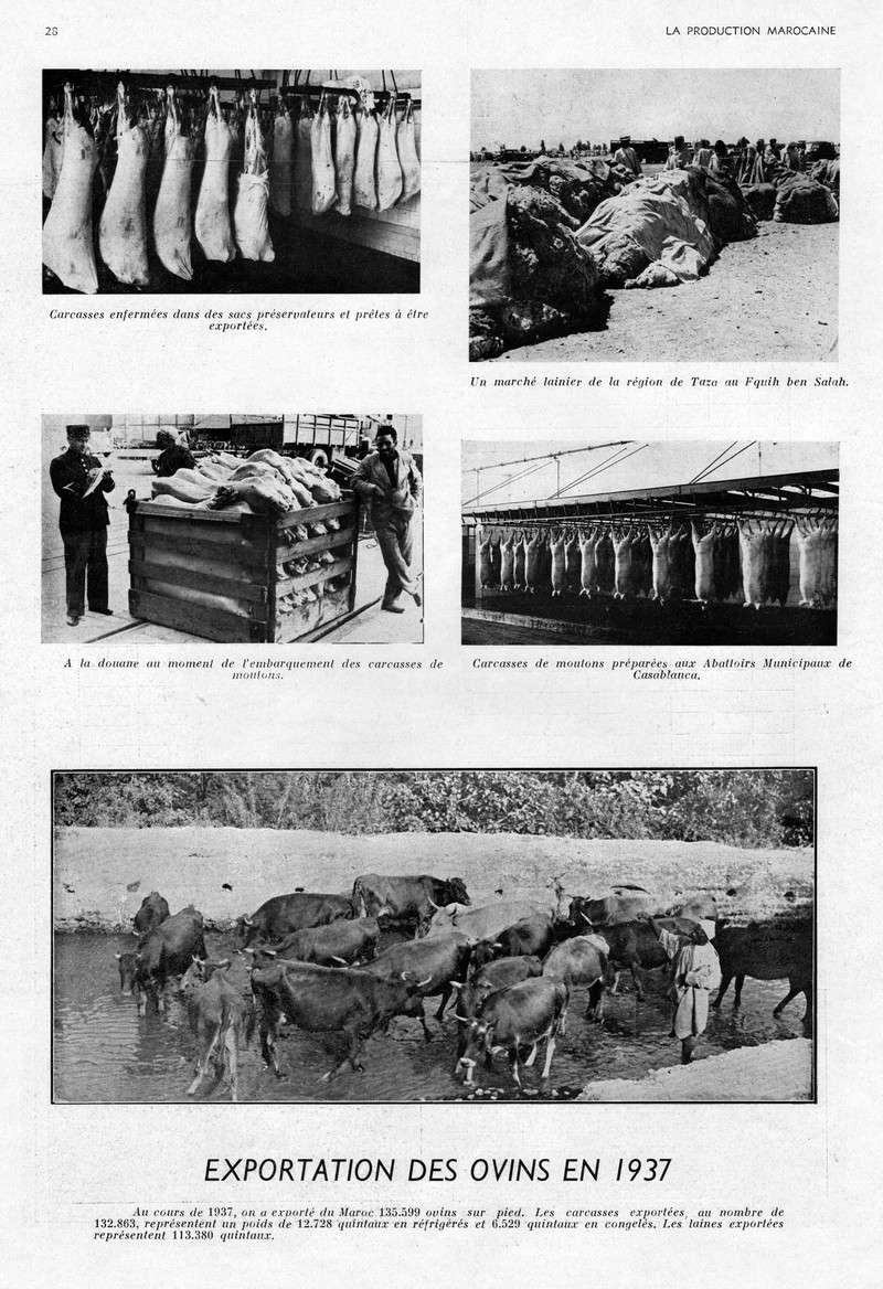 LA PRODUCTION MAROCAINE - Page 2 18-sca10