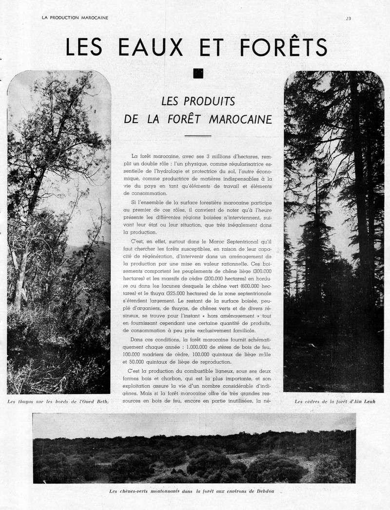 LA PRODUCTION MAROCAINE - Page 2 19-sca10