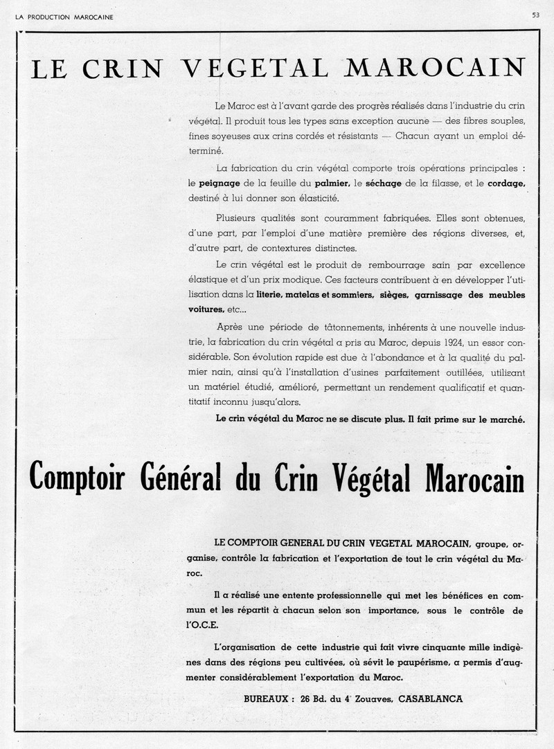 LA PRODUCTION MAROCAINE - Page 3 19-sca11
