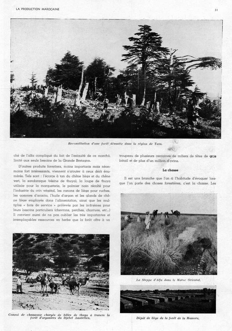LA PRODUCTION MAROCAINE - Page 2 21-sca10