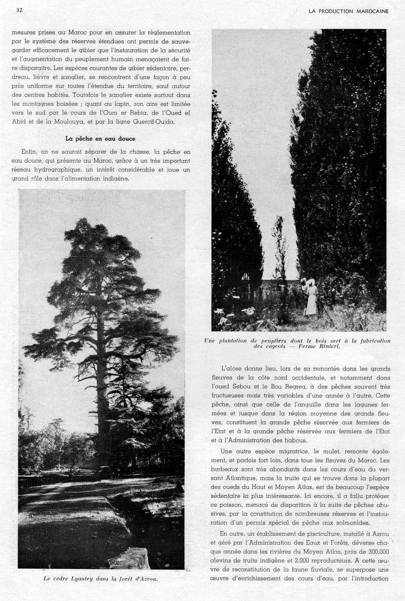 LA PRODUCTION MAROCAINE - Page 2 22-sca10