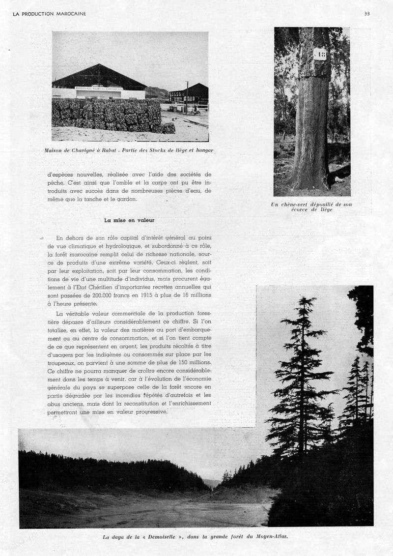 LA PRODUCTION MAROCAINE - Page 2 23-sca10