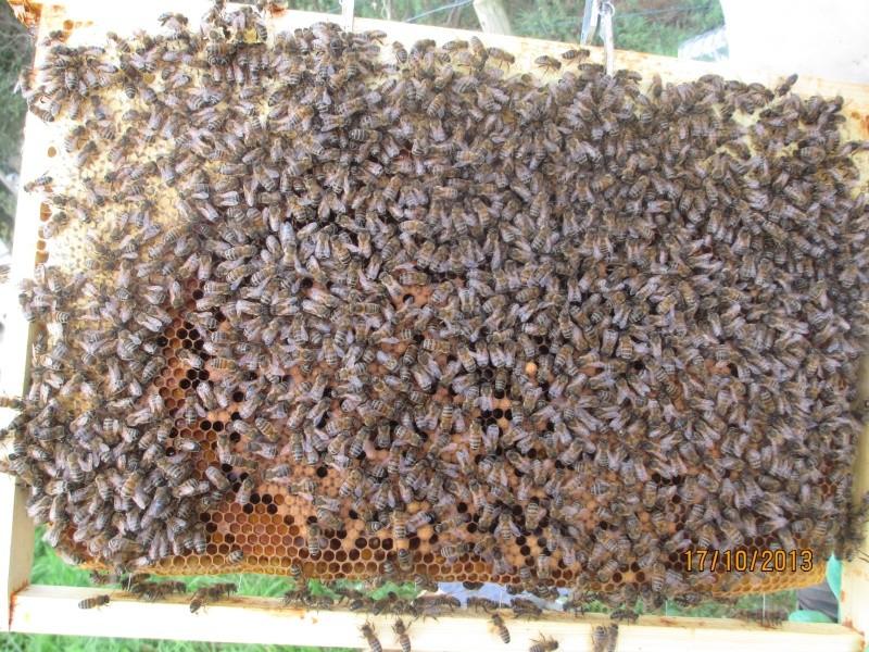 Une ruche , deux reines .... Abeill14