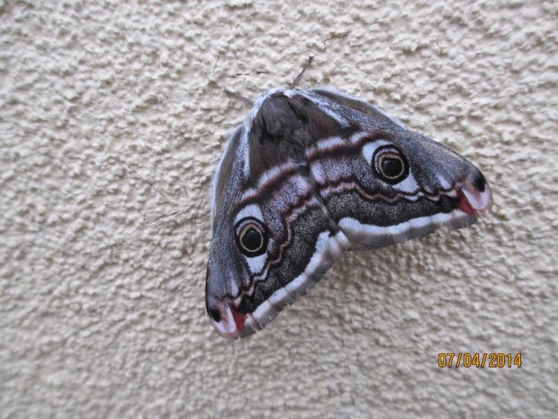 Beau papillon ^^ Papill10