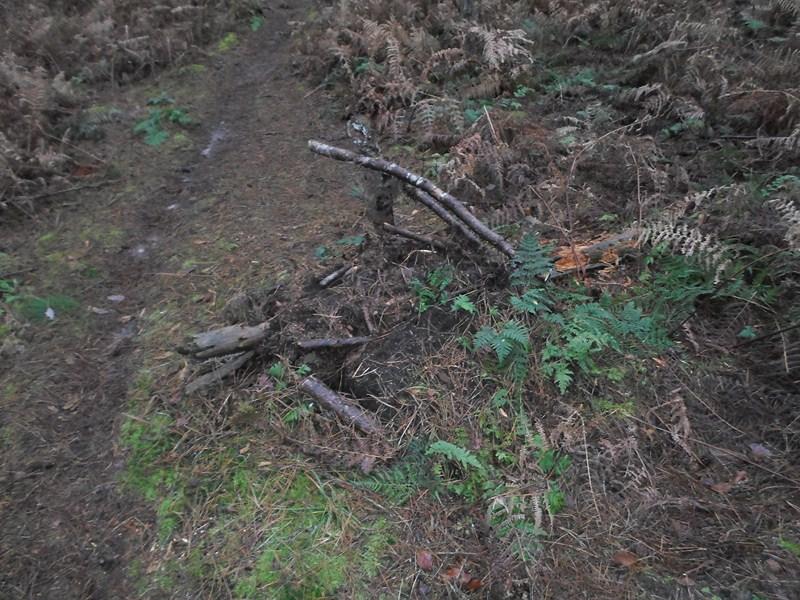 Forêt de Hez le 01er Janvier matin ??? + After Sam_1711