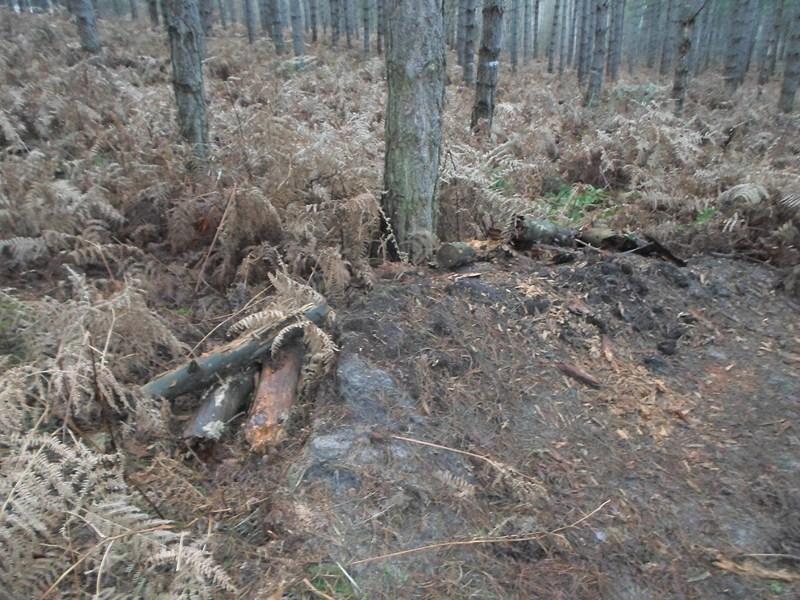 Forêt de Hez le 01er Janvier matin ??? + After Sam_1712