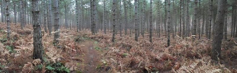 Forêt de Hez le 01er Janvier matin ??? + After Sam_1713
