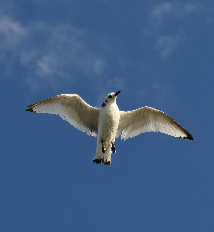 Attaque de faucon pèlerin P1730410