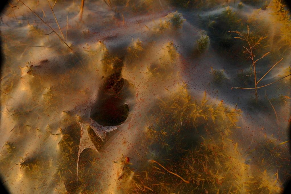 Micro araignées rouges P1750420
