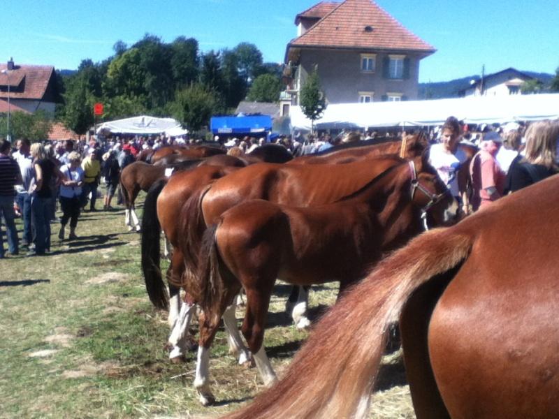 La plus grande foire de suisse 2013-014