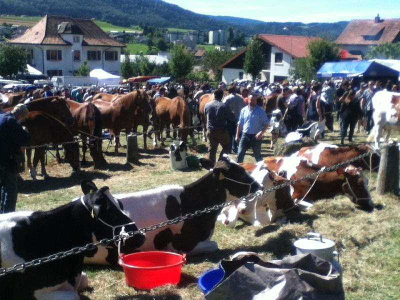 La plus grande foire de suisse 2013-015