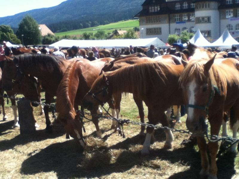 La plus grande foire de suisse 2013-016
