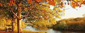 Les bonjours bonsoir de Novembre  Image12