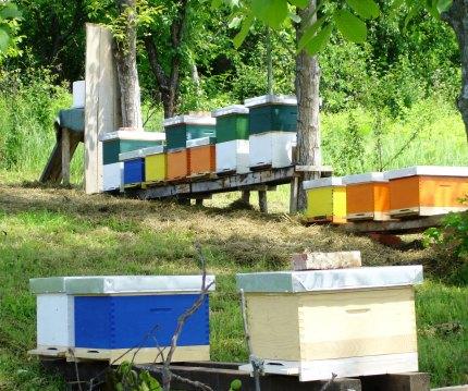 OBAVIJEST ČLANOVIMA: Sastanak pčelarske sekcije Moj_pa10