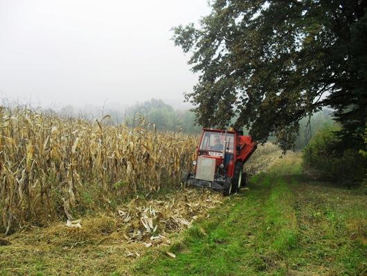 Popis stanovništva završen aktualna berba kukuruza Pictur10