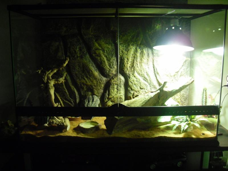 Premières photos de gizmo et son terra Dsci0112