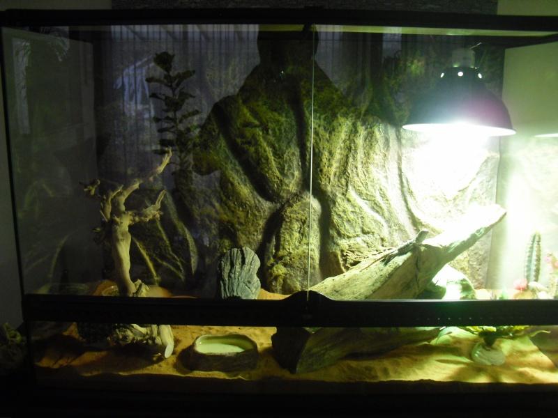 Premières photos de gizmo et son terra Dsci0113