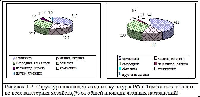 Состояние породного и сортового промышленного сортимента ягодных культур в Тамбовской области Козлова И.И.  Ndnndd31