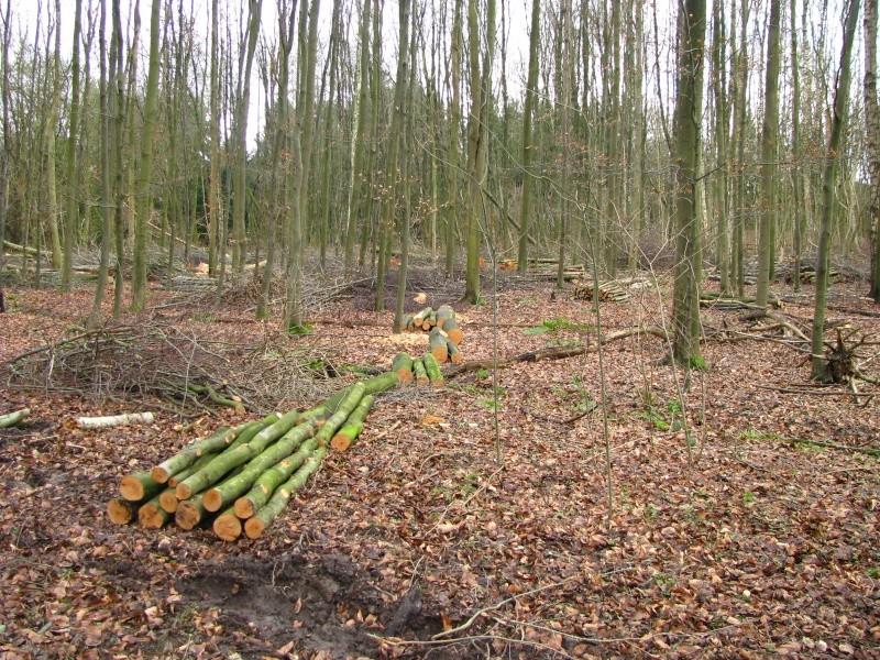 Promenade en Forêt de Soignes. 1010
