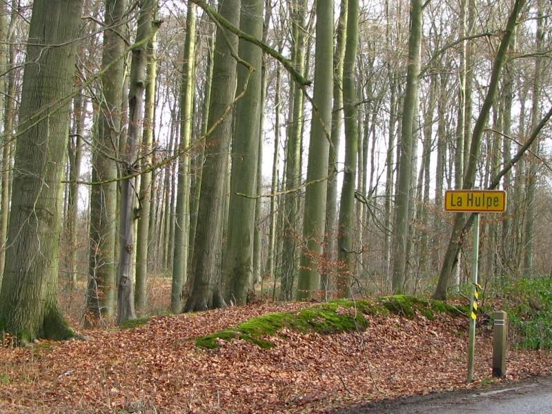 Promenade en Forêt de Soignes. 210