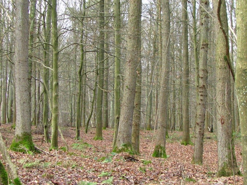 Promenade en Forêt de Soignes. 410