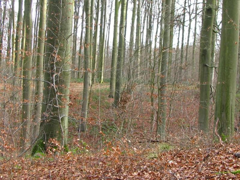 Promenade en Forêt de Soignes. 610