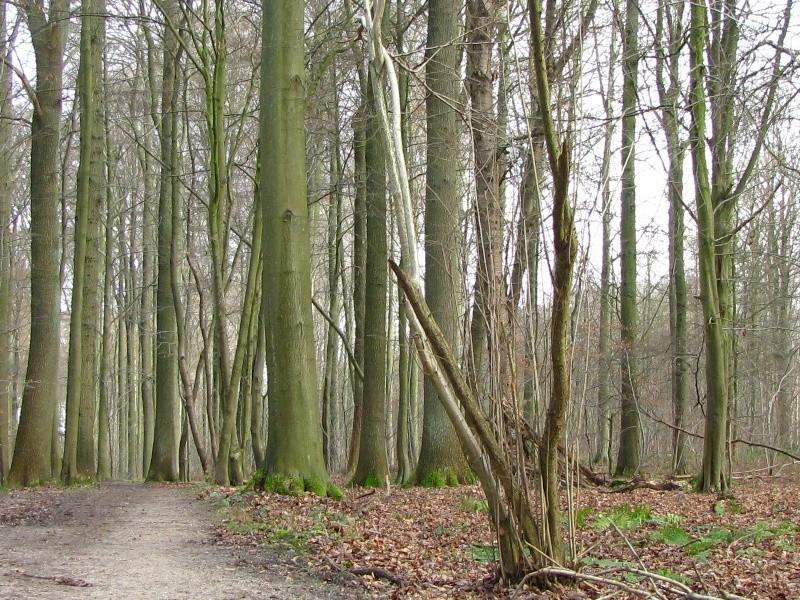 Promenade en Forêt de Soignes. 710