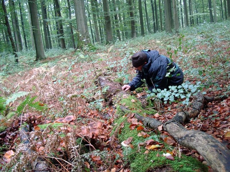 Sortie en Forêt de Soignes. Forat_11