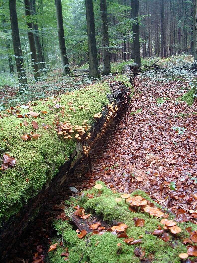 Sortie en Forêt de Soignes. Tronc_10