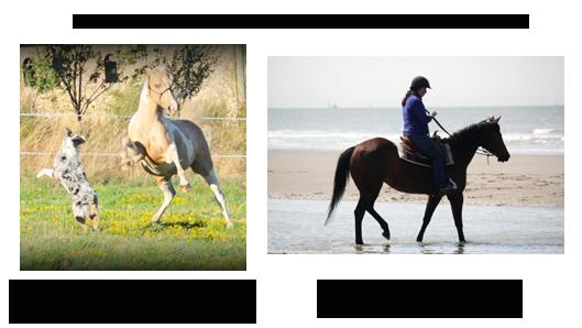 créer un forum : Equitation Classique & Western Gagnan10
